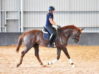 Exceptional 4 yr old Gelding by Negro