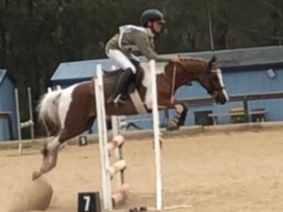 Showjumping / Performance Pony