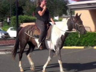 Black & White Paint QH Gelding