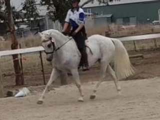 Exceptional Allrounder Pony