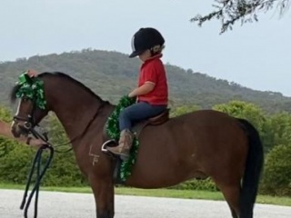 Child's Pony or Harness