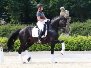 Top Level Dressage Prospect