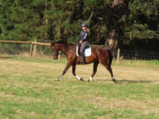 gentle and quiet trail riding/ARC gelding