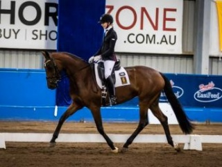 Dream mare for high level dressage, ARC/PC