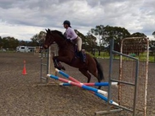 Extremely Quiet and Easy Gelding