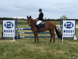 Competitive Showjumping Mare