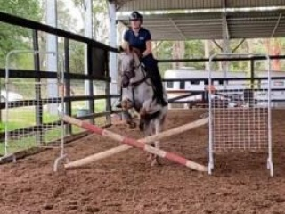 Exceptional pony for sale