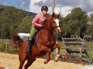 Talented allrounder QHx, suit range of disciplines