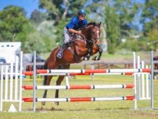 Junior/ Interschool/ Eventer/ Showjump / Dressage