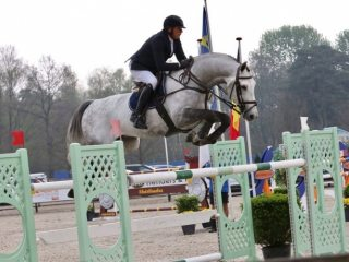 Stunning Quality Showjumper/Hunter Schoolmaster