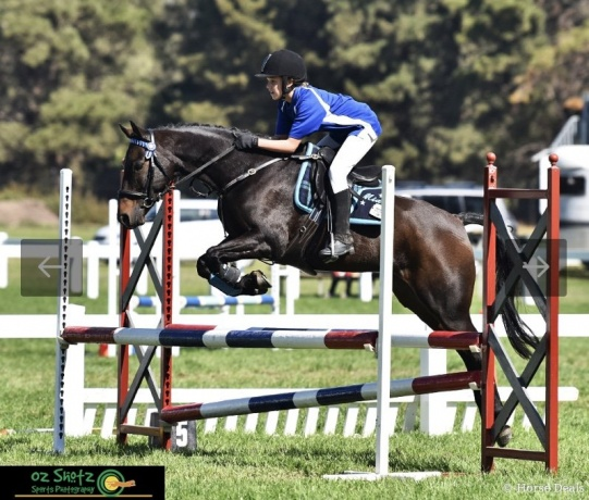 Perfect Showjumping & Dressage horse!