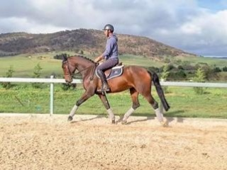 Talented and trainable mare