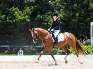 Superbly bred Elementary Mare by Dancier