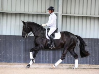 Exceptional Mare training FEI