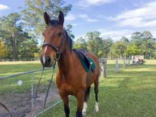 Project WB Gelding - MUST SELL