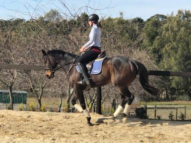 8yr old Thoroughbred Gelding Lots of Potential