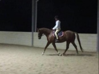 "Show horse/Fun Allrounder ""reduced price"""