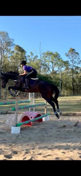 """""""Now On Top"""" Mare"""
