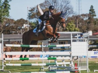 Experienced Junior/ Young Rider (135cm) Mare