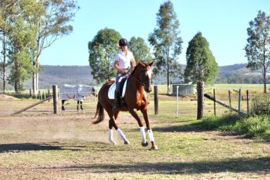 PRICE DROP - Spectacular Young Mare
