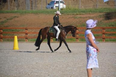 Stud or very talented show/riding prospect