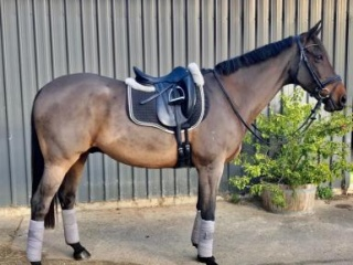 Dressage Performance Horse