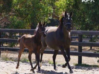 Quality Broodmare Everton Rejoice (Riverside)