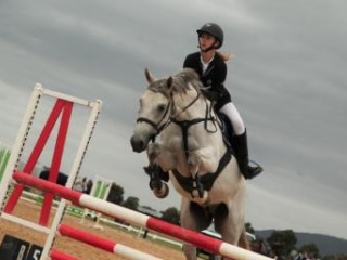 SUCCESSFUL SHOWJUMPING HORSE