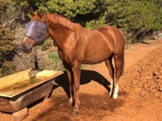 His Highness Broodmare