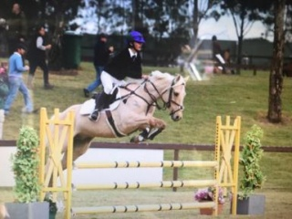 PRICE REDUCED Very Competitive Junior Showjumper