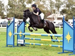 Highly competitive SJ pony
