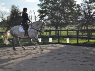Stunning Warmblood Mare, Breed or ride