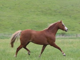Proven broodmare of top quality progeny