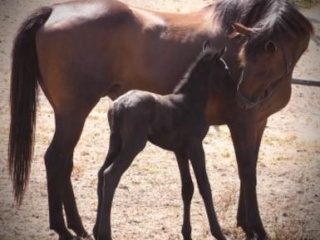 Exceptional Gonski Brood Mare