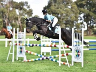 Exceptionally Talented Interschool Gelding;