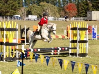 Top Competition Pony