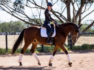 Competitive AAOR/ Interschool Gelding