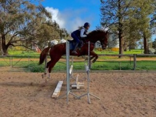 Dressage, Eventing or Showjump- So much Potential