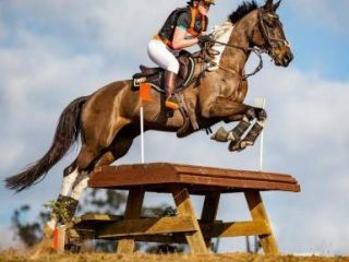 TOP COLOURED EVENTING STAR $POA