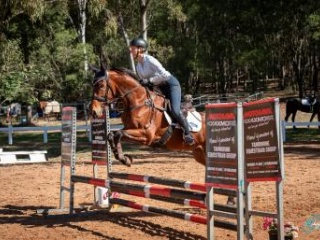 Very talented 5yo TB mare with loads of potential