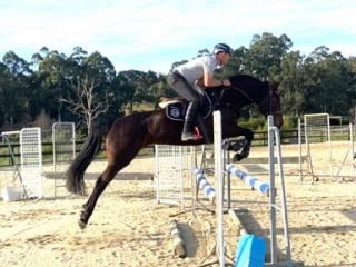 Classy 6 year old Showjumping Mare by Embassy III