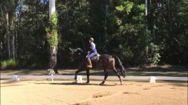 Seriously talented Warmblood Mare