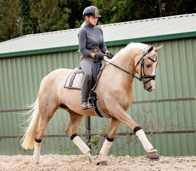 QUALITY AND COLOUR - WB Mare