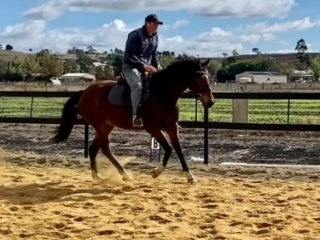 Kind Thoroughbred For Sale