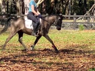 Talented jumping/ sporting pony