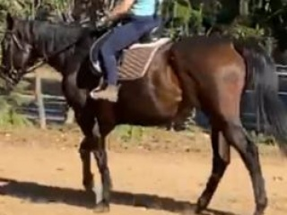 17.1hh Thoroughbred Project