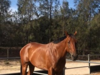 Stunning young project OTTB