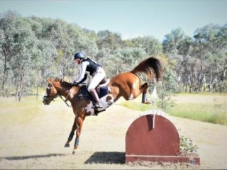 Paint Eventing Mare