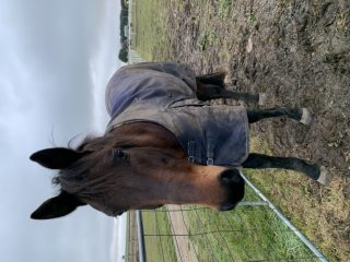 beautiful genuine boy has a lot of potential and will give anything a go!