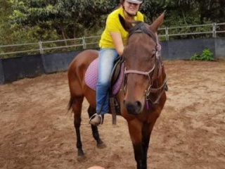Easygoing Trail Horse